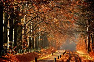 Fotos Herbst Park Nebel Ast Bäume Allee Natur