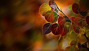 Bilder Herbst Großansicht Blatt Ast Natur