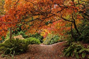 Fotos Jahreszeiten Herbst Seattle Weg Ast Washington Park Arboretum Natur