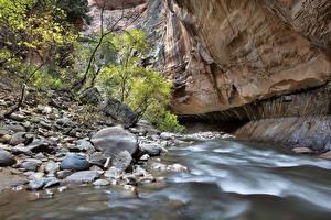 Bilder Vereinigte Staaten Flusse Steine Zion-Nationalpark Canyon Felsen Utah