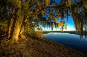 Hintergrundbilder Vereinigte Staaten Flusse Küste Bäume HDRI Ast Bryan Georgia Natur