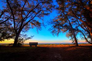 Fotos Landschaftsfotografie Sonnenaufgänge und Sonnenuntergänge Bäume Bank (Möbel) Ast Natur