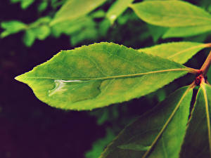 Image Water Closeup Leaf Green Nature
