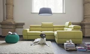 Pictures Dogs Interior Living room Room Sofa Spaniel Animals