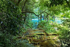 Bilder Tropen Flusse Bäume Ast Jungle Natur