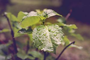 Image Closeup Foliage Drops Green Nature