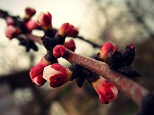 Fotos Frühling Blühende Bäume Ast Natur