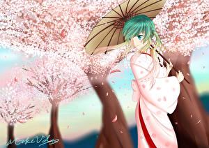 Tapety na pulpit Vocaloid Hatsune Miku Kimono Sakura Parasolem mikevd Dziewczyny