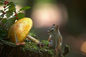 Fotos Eichhörnchen Pilze Natur Laubmoose Tiere