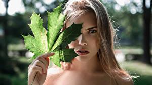 Fonds d'écran Feuillage Acer Châtain clair Voir The arteries of nature Aleksandra Bikova George Chernyadyev Filles