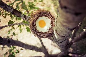 Fotos Ei Spiegelei Nest Ast das Essen