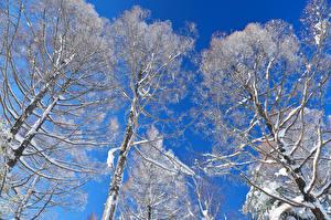Hintergrundbilder Winter Bäume Schnee Ast Natur