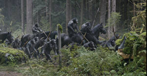 Images Horses Monkey Dawn of the Planet of the Apes Fantasy Animals