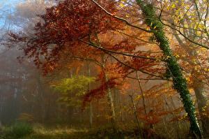 Hintergrundbilder Wälder Herbst Nebel Bäume Ast Natur