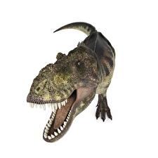 Fonds d'écran Anciens animaux Dinosaures Tyrannosaurus rex Dents ready 3D_Graphiques