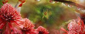 Bakgrunnsbilder Insekter Edderkopper Edderkoppsilke Dyr