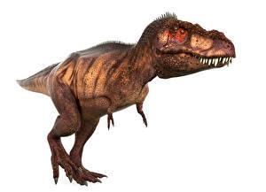 Fonds d'écran Anciens animaux Dinosaure Tyrannosaurus rex 3D_Graphiques