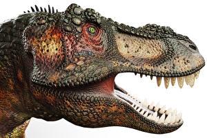 Fonds d'écran Anciens animaux Dinosaures Tyrannosaurus rex Dents Tête 3D_Graphiques