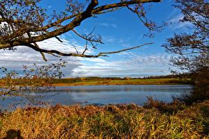 Bilder Deutschland Landschaftsfotografie Flusse Himmel Herbst Gras Ast Ulmen Natur