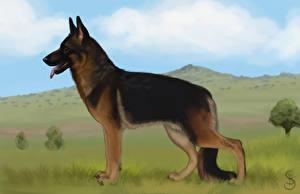 Hintergrundbilder Hunde Gezeichnet Deutscher Schäferhund Shepherd