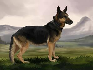 Bilder Hunde Gezeichnet Deutscher Schäferhund Shepherd