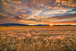 Hintergrundbilder Felder Sonnenaufgänge und Sonnenuntergänge Himmel Landschaftsfotografie Weizen Ähre Wolke Natur