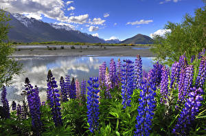 Image New Zealand Mountain Landscape photography Lake Lupinus Sky Clouds Nature