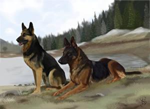 Bilder Hunde Gezeichnet Deutscher Schäferhund Zwei Shepherd Tiere