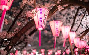 Fotos Ast Nacht Japanische Kirschblüte Laterne