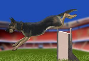 Hintergrundbilder Hunde Gezeichnet Deutscher Schäferhund Shepherd Laufsport