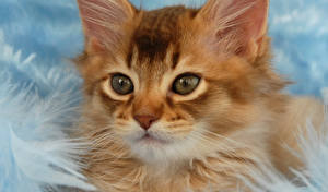 Wallpapers Cats Eyes Red orange Staring Animals