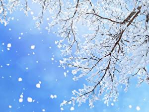 Fotos Jahreszeiten Winter Ast Schnee Schneeflocken Natur