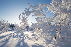 Hintergrundbilder Kanada Winter Schnee Ast Kakisa Northwest Territories Natur