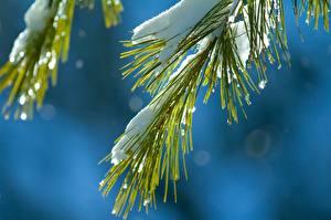 Hintergrundbilder Winter Großansicht Ast Schnee Natur