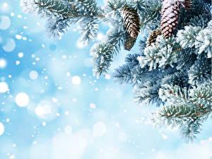 Fotos Winter Ast Zapfen Schnee Natur