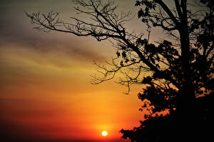 Bilder Sonnenaufgänge und Sonnenuntergänge Ast Sonne Silhouette Bäume Natur
