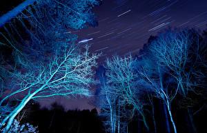 Bilder Wälder Stern Nacht Bäume Ast Natur