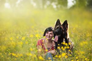 Fotos Hunde Grünland Shepherd Mädchens Tiere