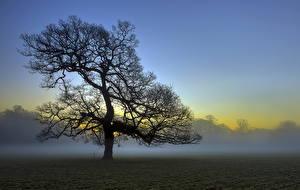 Fotos Nebel Bäume Ast Natur