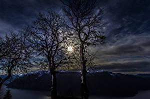 Hintergrundbilder Nacht Bäume Ast Natur