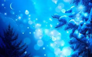 Fotos Jahreszeiten Winter Neujahr Nacht Schnee Mond Ast Schneeflocken Fichten Natur