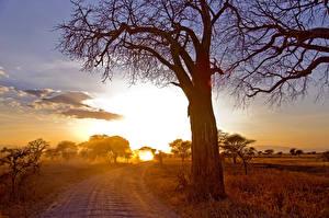 Bilder Landschaftsfotografie Straße Bäume Ast Natur