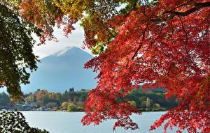 Hintergrundbilder Japan Herbst See Gebirge Fuji Vulkan Vulkan Ast Natur