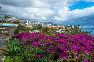 Pictures Portugal Building Veranera Clouds Funchal Madeira Island Cities