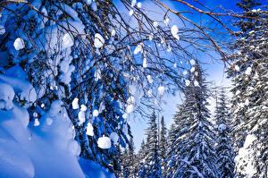 Fotos Russland Winter Schnee Ast Natur