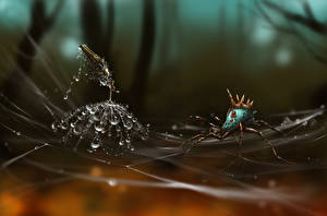 Bakgrunnsbilder Edderkopp Edderkoppsilke Dråpe Fantasy