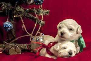 Hintergrundbilder Feiertage Neujahr Hunde Welpe Kugeln Ast 2 Tiere