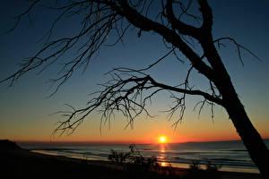 Bilder Sonnenaufgänge und Sonnenuntergänge Meer Bäume Ast Sonne Silhouette Natur