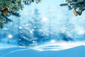 Fotos Winter Schnee Zapfen Ast Natur