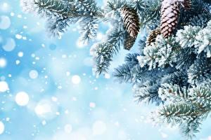 Hintergrundbilder Neujahr Vorlage Grußkarte Schnee Tannenbaum Zapfen Ast Natur